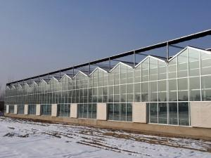 Glass connected Greenhouse